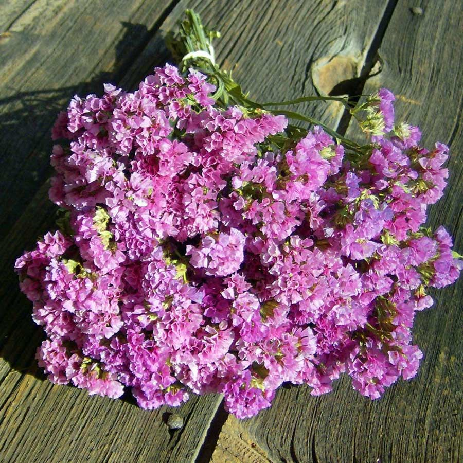 Statice American Beauty Limonium Sinuatum Excellent For Fresh Or