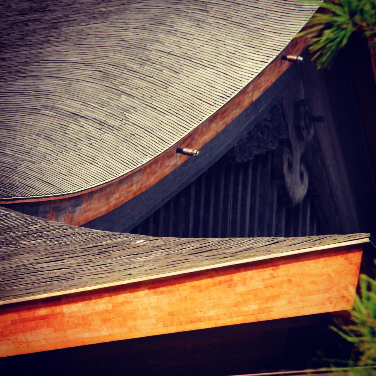 "art-kyoto-jp: "" No.150 at Ginkakuji Temple, Kyoto The edge of a wing of the ""bird"" in No.149 """