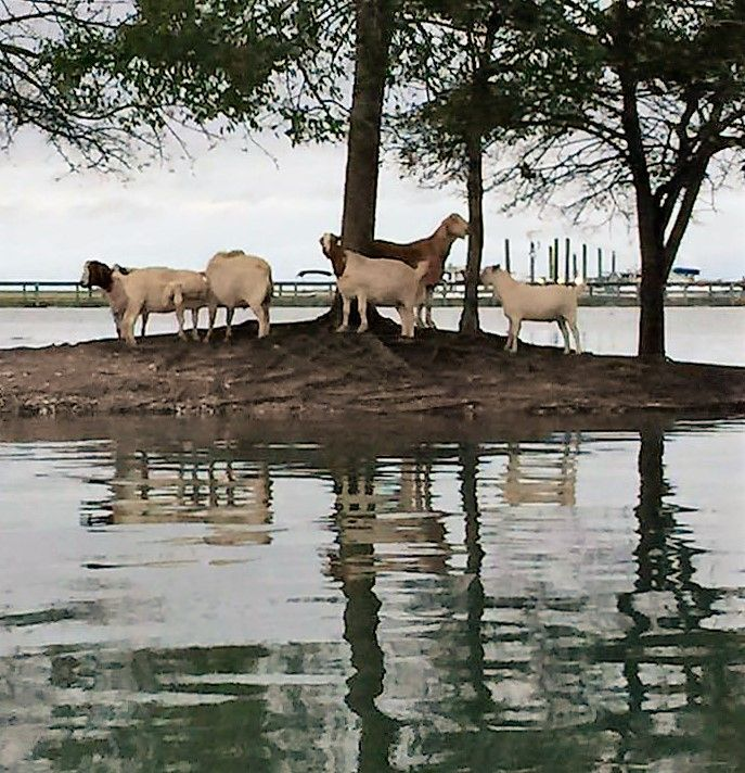 Goat Island On A King Tide In Murrells Inlet Pc By Linsey Antol
