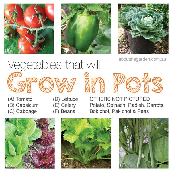 Australia Vegetable Garden That Will Grow In Pots Organic 400 x 300