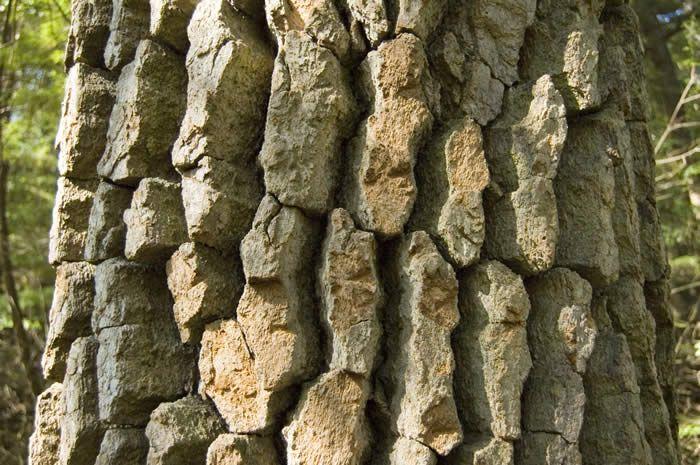 black gum tree Native plants, Mother nature, Sandy soil