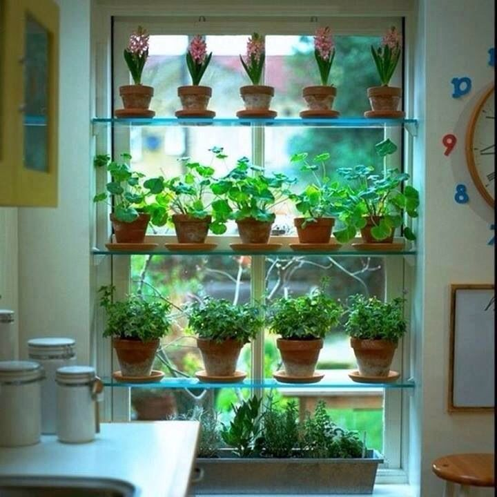Kitchen Plant Shelf Decorating Ideas: Best 25+ Window Herb Gardens Ideas On Pinterest