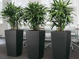 Charmant Image Result For Large Office Plants