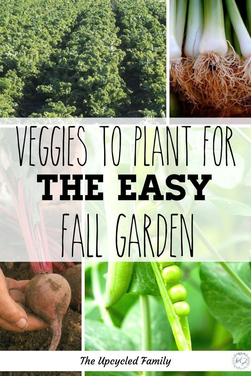 5 Easy-To-Grow Veggies For Your Successful Fall Garden