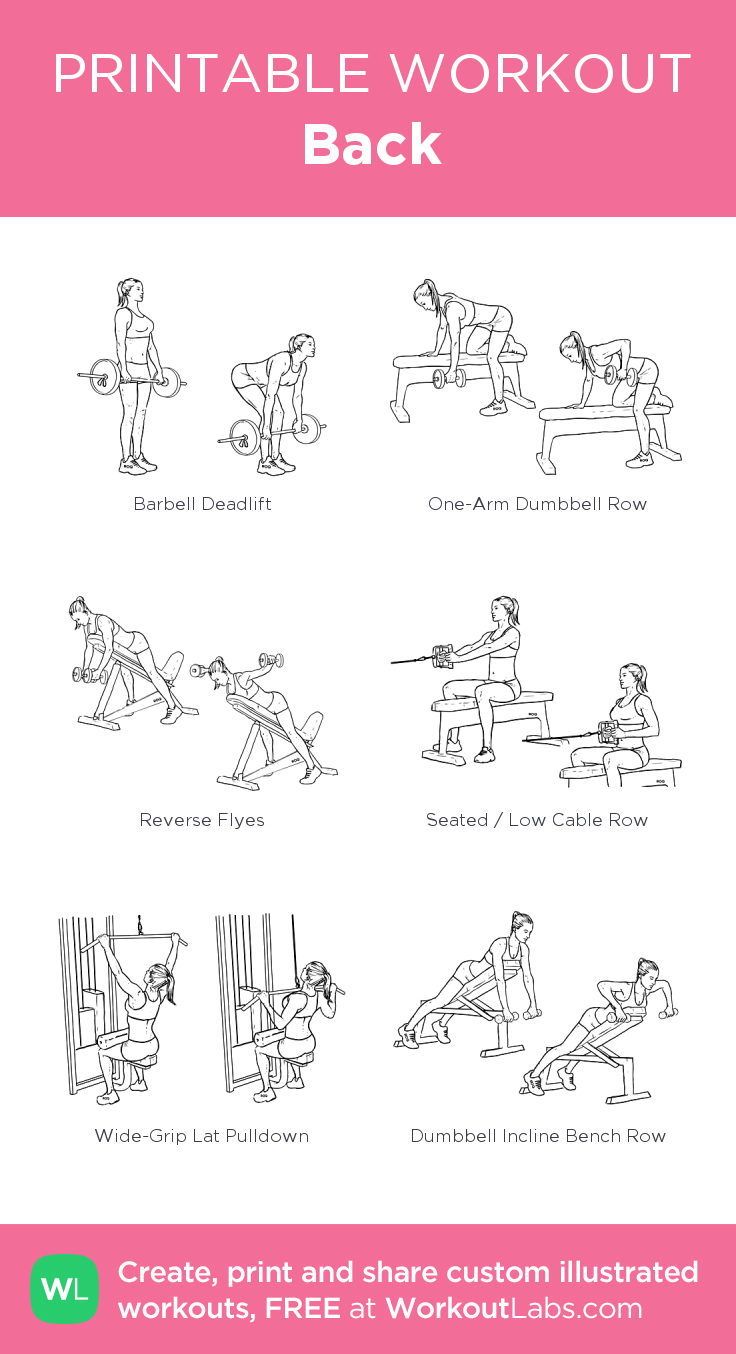 Back · WorkoutLabs Fit #bicepsworkout