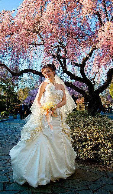 Wedding: Cherry blossom formal by Ryan Brenizer, via Flickr