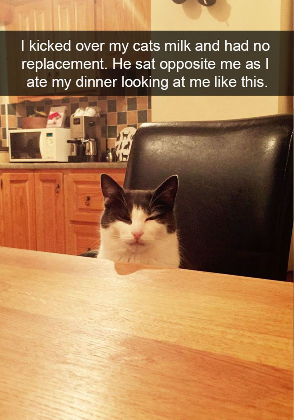 The 28 Funniest Cat Snapchats Of All Time Funny Cat Memes Funny Cat Pictures Funny Animals