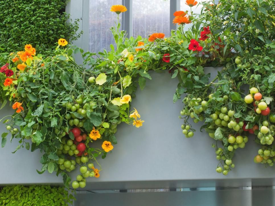 Improve Your Views With Window Boxes Brimming With Garden Fresh