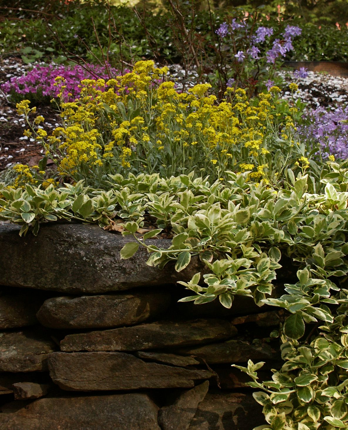 ideas for plants that will cascade over retaining wall new england gardening forum gardenweb - Vegetable Garden Ideas New England