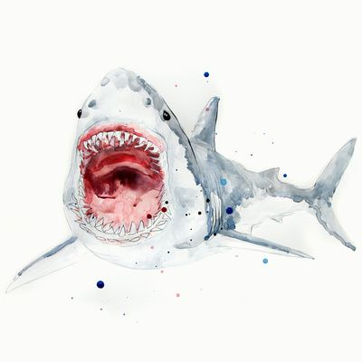 Great White Shark Art Print | ART | Pinterest | Tiburones, Acuarela ...