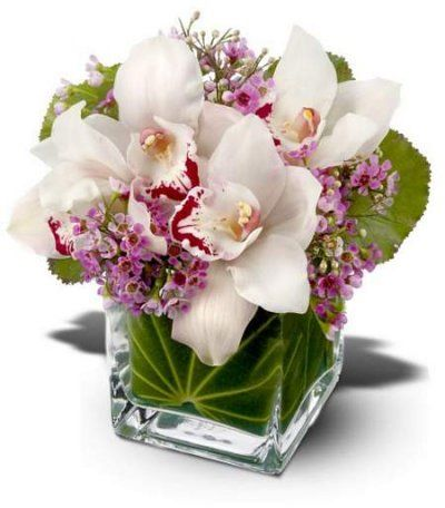 mother's day flower arrangements ideas   Lovely Orchids from Florist in Raleigh, NC - English Garden