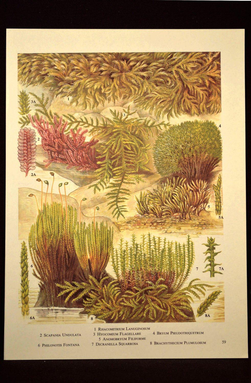 Botanical Print Moss Wall Art Mosses Print Plant Wall Decor | Nature ...