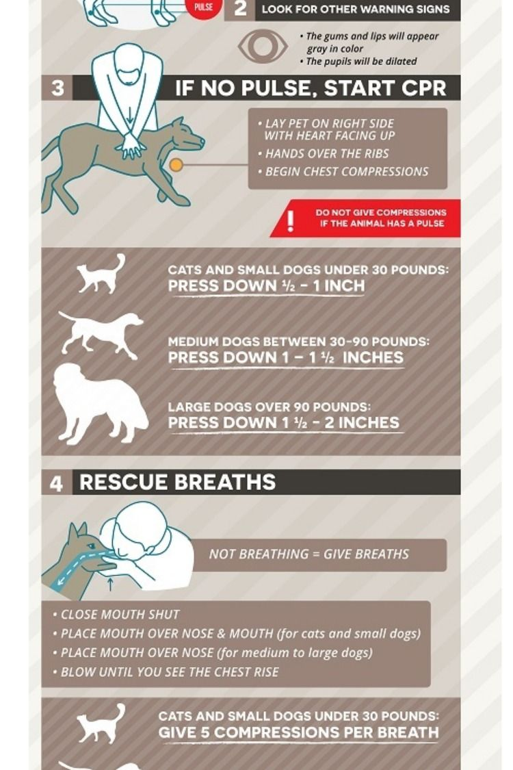 The Ultimate Cpr Cheat Sheet Guide For Adult Child Infant Pet