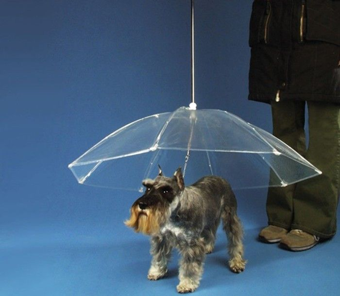 Best 25 Dog Umbrella Ideas On Pinterest Dog Transport