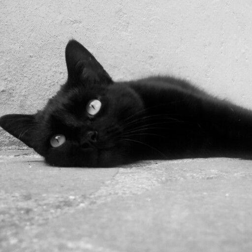 #mycat #meow #blackcat