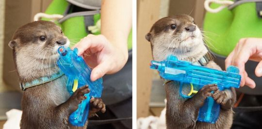 Due to budget cuts the Navy SEALs will be replaced by the Navy OTTERs.