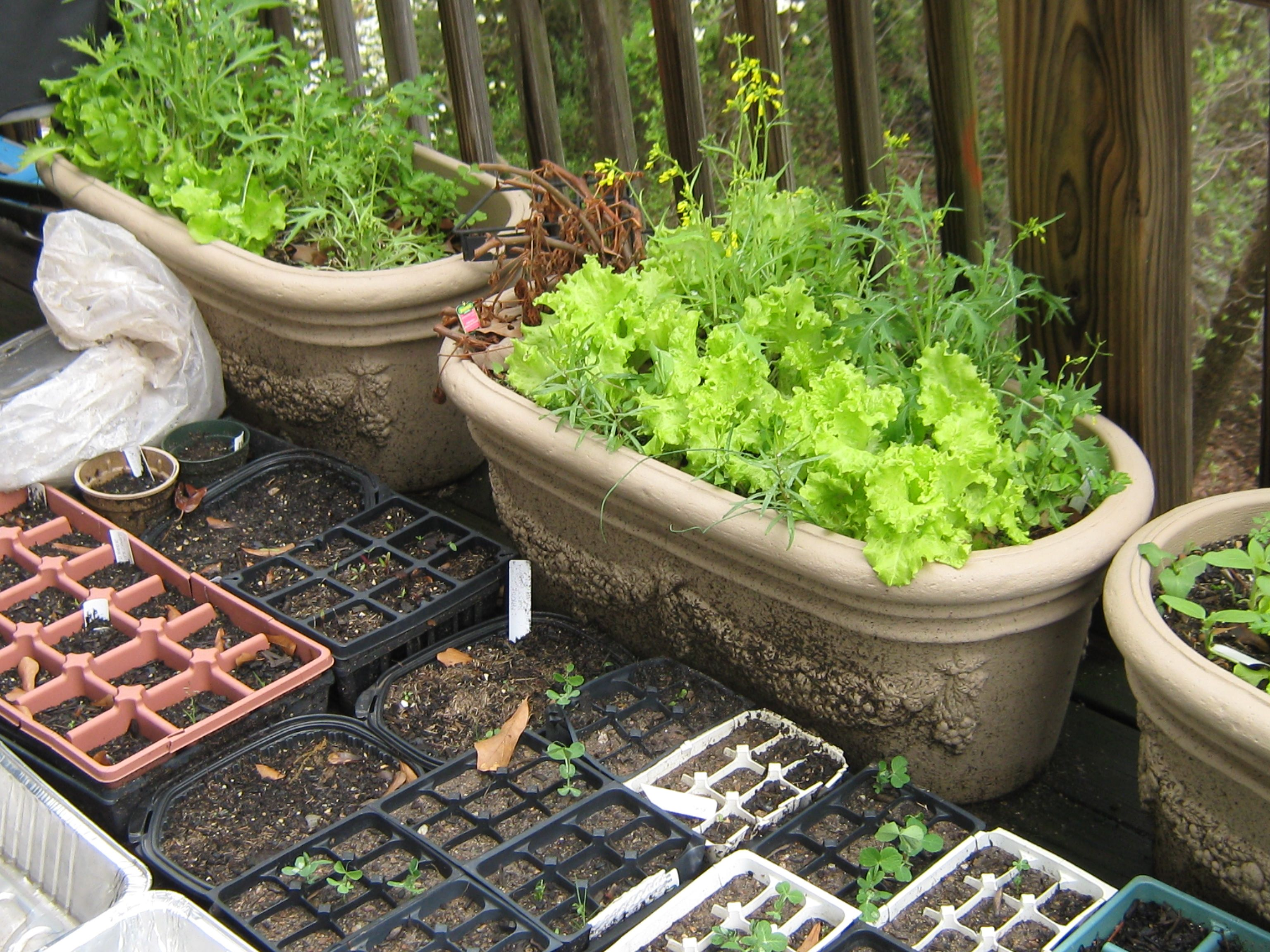 Amazing Plush Why Garden
