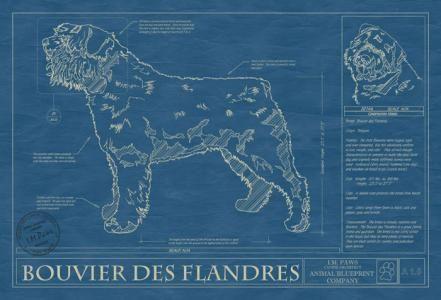 Animal Blueprint Company: Bouviers De Flandres Dog Blueprint