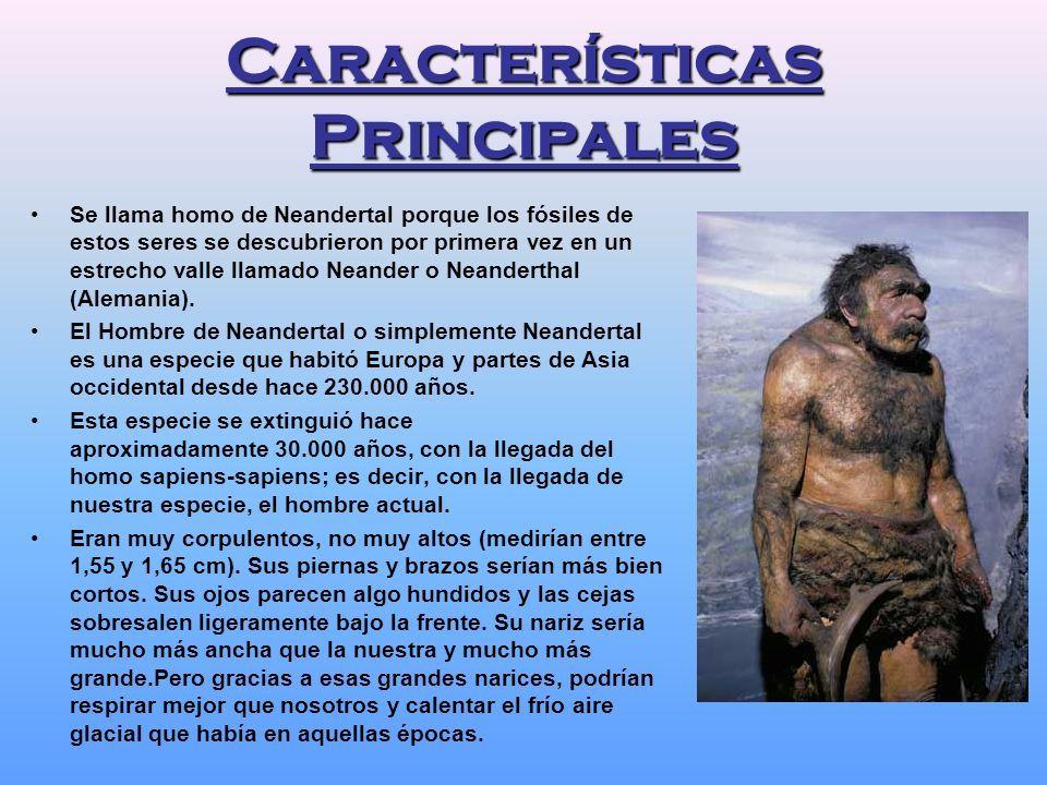 Resultado de imagen de neandertal   Pscología_bases_bioloogicas ...