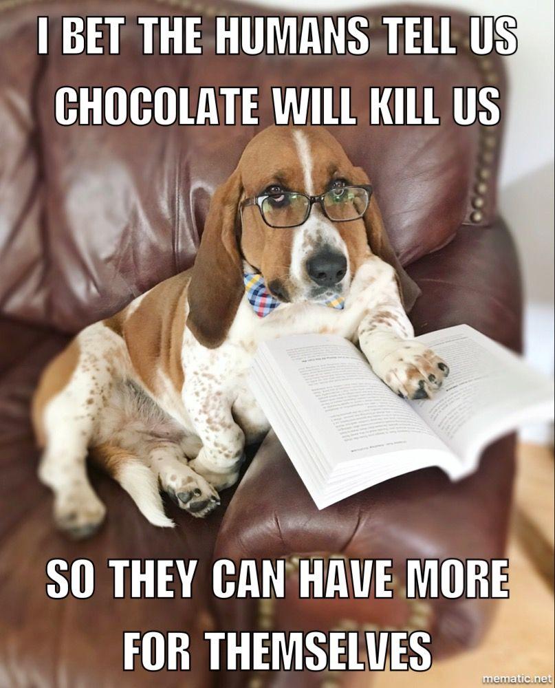 Watson S Wisdom Wednesday Basset Hound Dog Memes Quotes