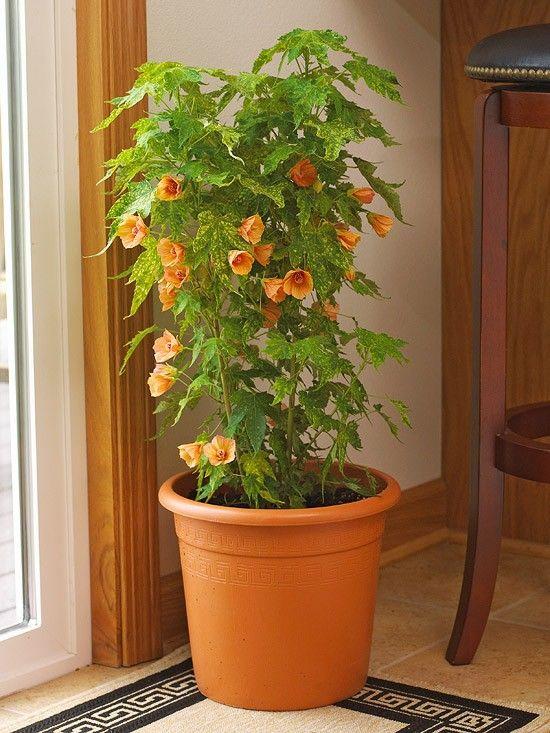 blooming houseplants