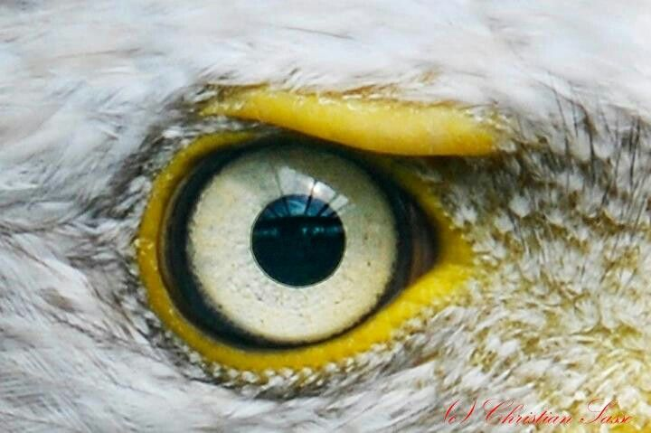 Eagle Eye Reptile Eye Eye Close Up Beautiful Eyes
