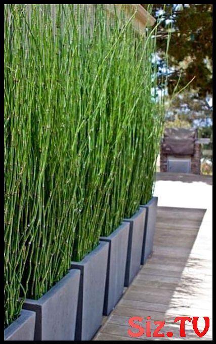 Garten Terrasse Balkon Sichtschutz 60 Ideen Garten Terrasse Balkon Sichtschutz #balconyprivacy
