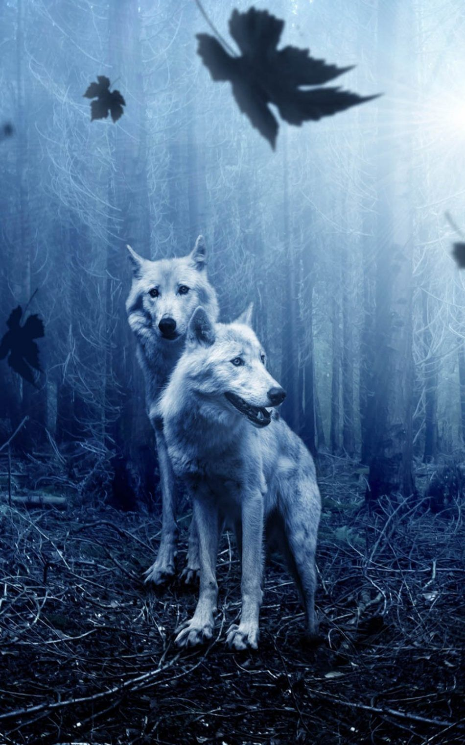 Wolves Night Forest 4k Ultra Hd Mobile Wallpaper Animal Wallpaper Wolf Wallpaper Animals