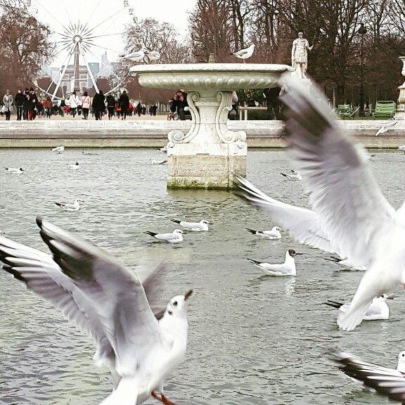 Tuileries. France.