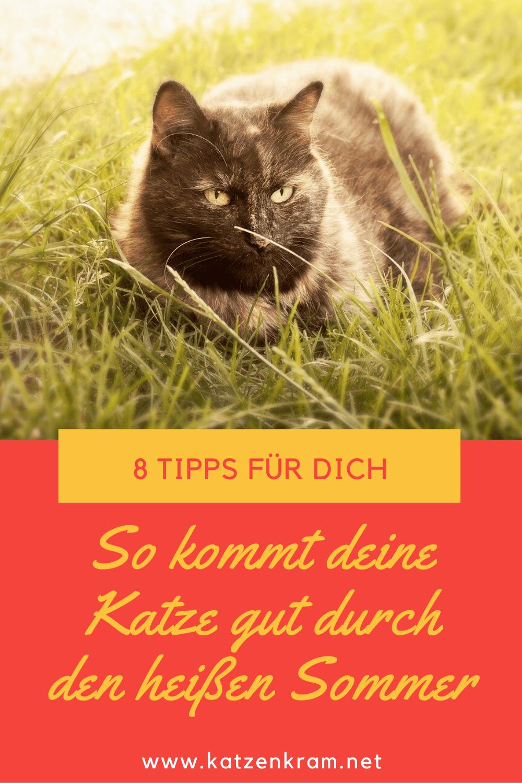 Katzen Und Hitze 8 Tipps Wie Deine Katze Gut Durch Den Sommer