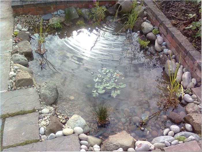 Small wildlife pond evington ponds pinterest pond for Backyard pond animals