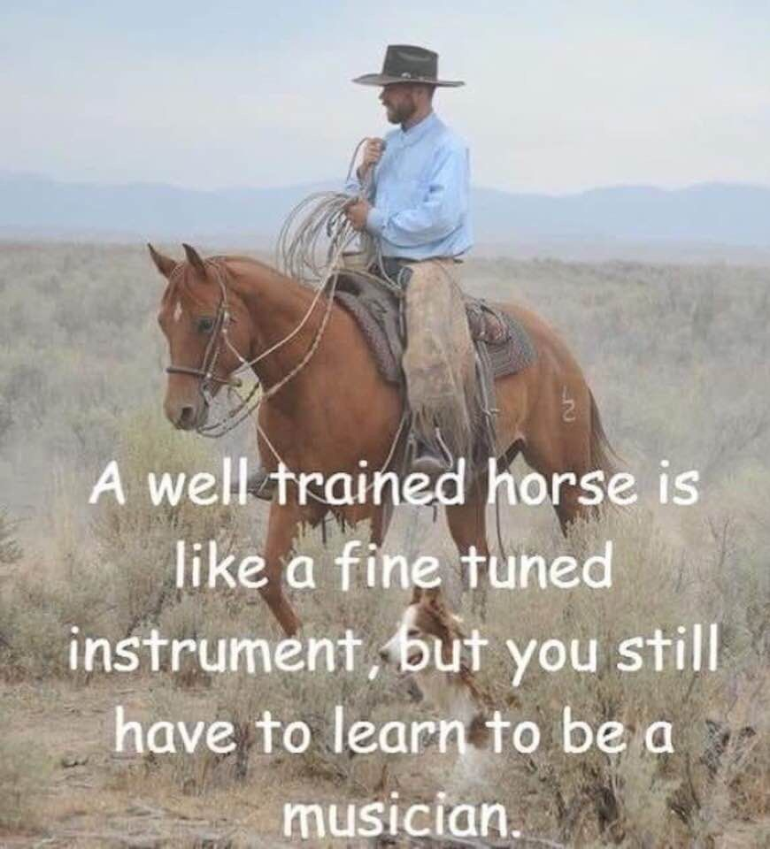 Horse Quotes, Animal Quotes, Western Pleasure, Horse Pictures, Horse Girl,  Horse