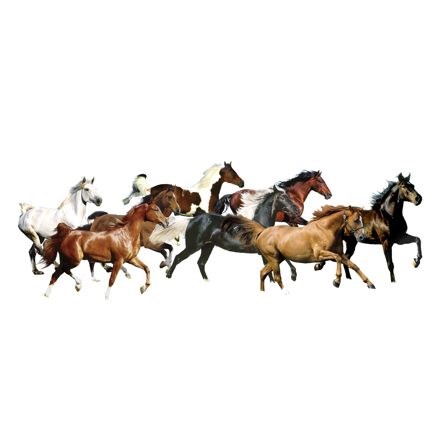 7 White Horse Images Horse Png Horse Clipart Transparent White Horse Images White Horse Horses