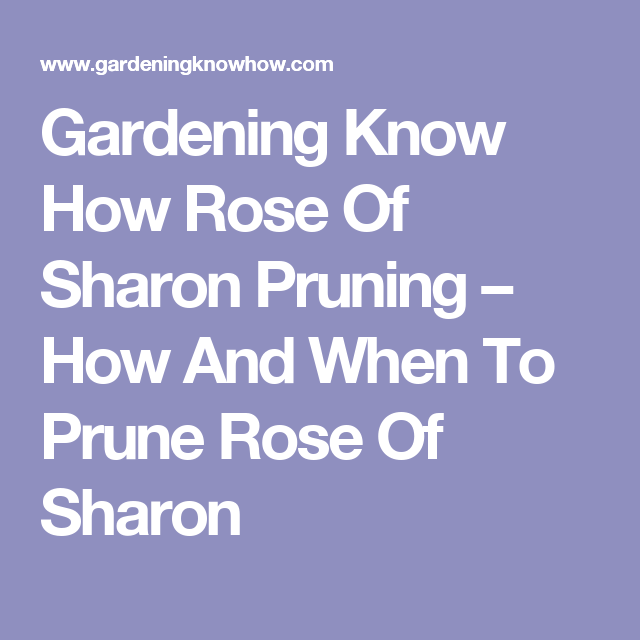 Gardening Know How Rose Of Sharon Pruning How And When To Prune Rose Of Sharon Peach Trees Pruning Raspberries Rhubarb Plants