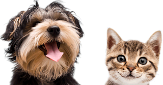 Argos Pet Insurance Uk Get Rover Insured Find And Compared