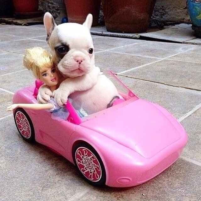 A date with Barbie