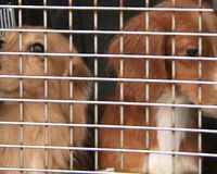 Urge Severe Animal Cruelty Charges in Horrific Shelter Case of 71 Dachshund Dogs