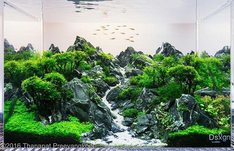 Awesome Scape                                                  #aquascape # Aquarium #aqua #aquascaping #wood #grass #tetra #fish #fishtank #tropical  ...