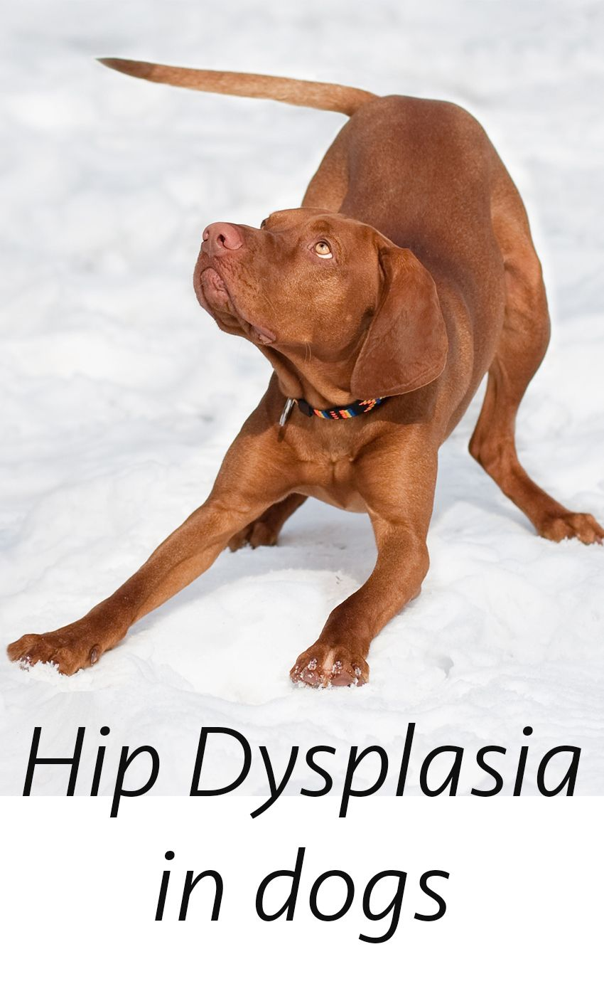 Pin On Dog Behavior Health Veterinary