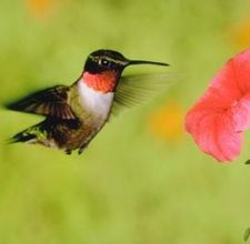 Would love to plant more flowers to have a hummingbird garden