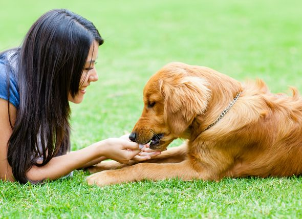 Keeping Your Dog S Immune System Balanced Can Help Reduce Risks Of
