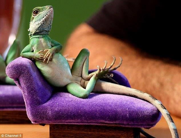 I Miss My Iguanas They Are Awesome Pets Funny Images