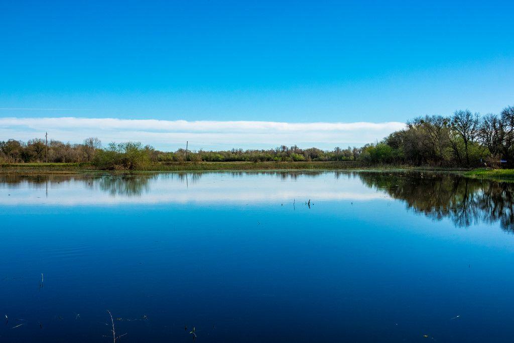 randyherring posted a photo:  Cosumnes River Preserve near Elk Grove, California.