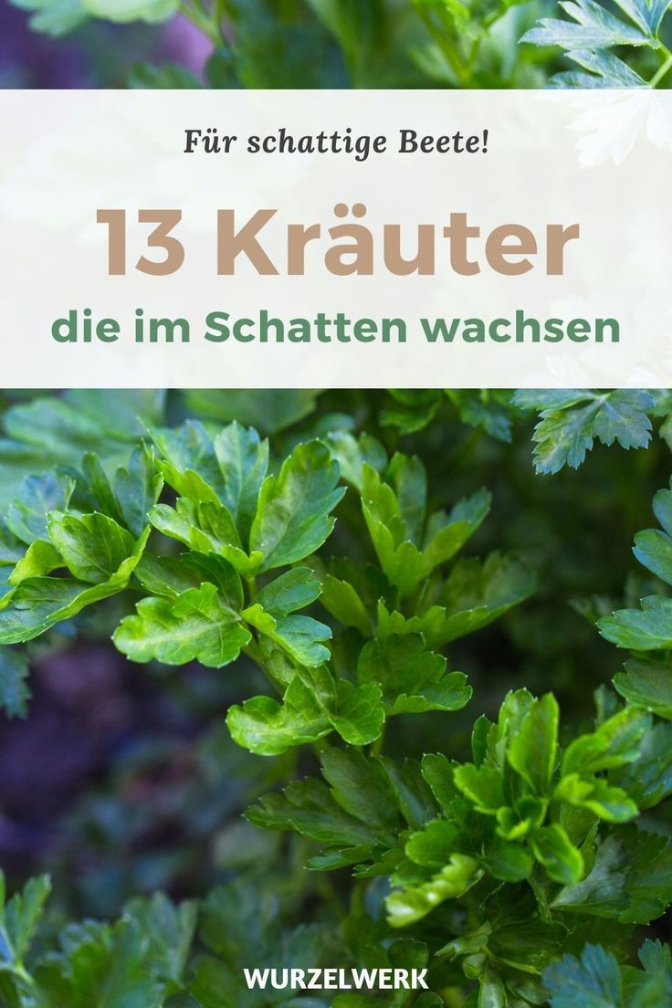 43 Kräuter, Obst- und Gemüsepflanzen, die auch im Schatten wachsen - Wurzelwerk