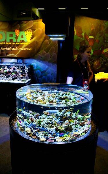 Aquariums Saltwater Fish Tank