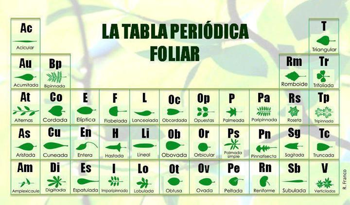 Tabla periodica foliar science and nature pinterest tabla periodica foliar urtaz Gallery