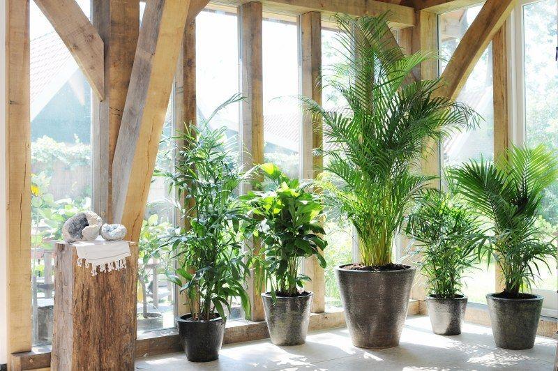 15x Eucalyptus Huis : Pin van karlien goyvaerts op groen pinterest kamerplanten