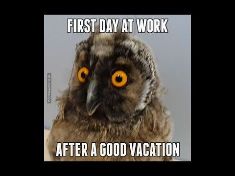 Youtube Back To Work After Vacation First Day Of Work Back To Work Quotes After Vacation