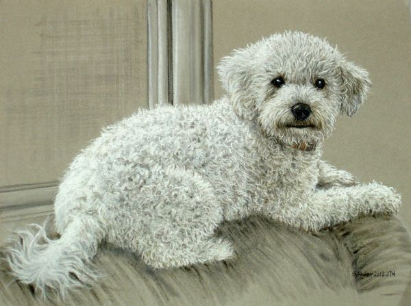 Original Pastel Drawing Cute White Poodle Puppy Dog Sally Porter Wildlife Art Realism Poodle Or Bichon Short E Original Pastel Poodle Puppy Pastel Drawing