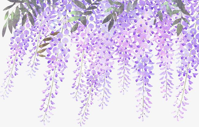 Painted Lavender Wisteria Flowers Pink Flowers Background Flower Art Painting Watercolor Flowers